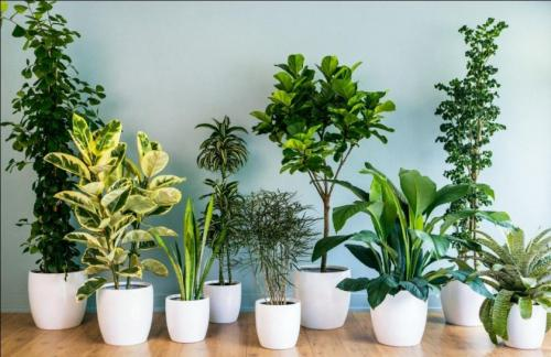 Растения для дома напольные. Декоративные растения для дома