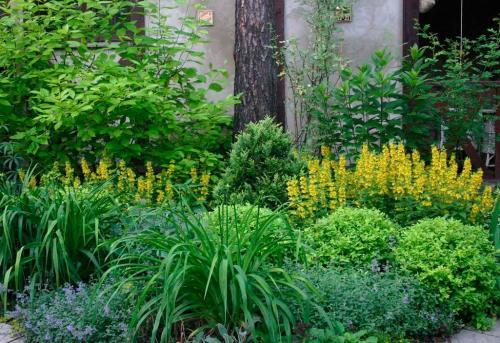 Растения для тенистых мест. Характеристика тенелюбивых растений