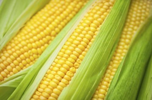 Варить кукурузу в холодной или горячей воде. Как правильно варить кукурузу: полезные советы