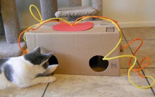 Игрушки для кошек своими руками из подручных средств в домашних условиях. Простые идеи отличных игрушек для котов, созданных из подручных материалов