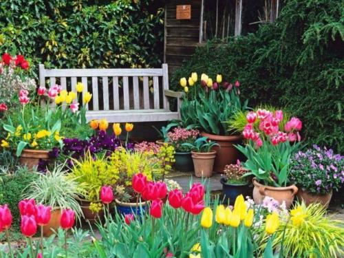 Как выращивать дома тюльпаны. Общие сведения о жизненном цикле в холодное время