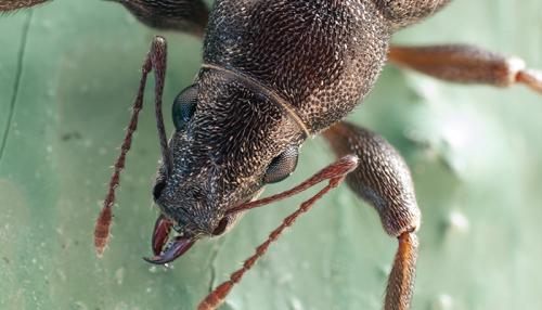 Очень мелкие насекомые на кухне. Разновидности насекомых