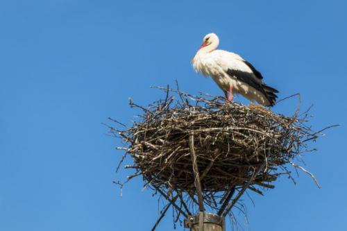 Гнездо для аиста. Гнездо аиста — узнайте где строят гнезда аисты и как привлечь внимание молодого аиста к своему участку (115 фото + видео)