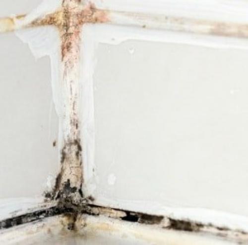 Причина появления плесени в ванной комнате. Последствия заражения патогенной флорой